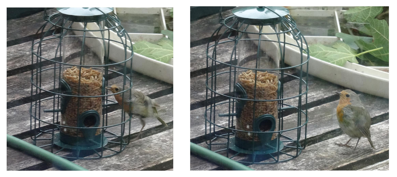 Explaining the absence of birdlife in my garden ...